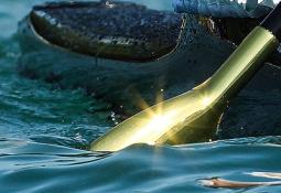 Canoe sprint paddle shot